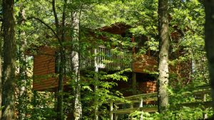 Wooded_Cabin-1000x562